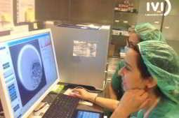Como estão os embriões no laboratório FIV?