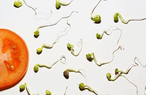 Substâncias presentes na soja influem negativamente na qualidade do esperma